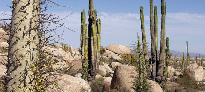 Understanding the Two Groups of Cacti